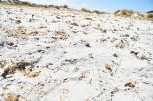 feiner Sandstrand Capo Comino, Sardinien